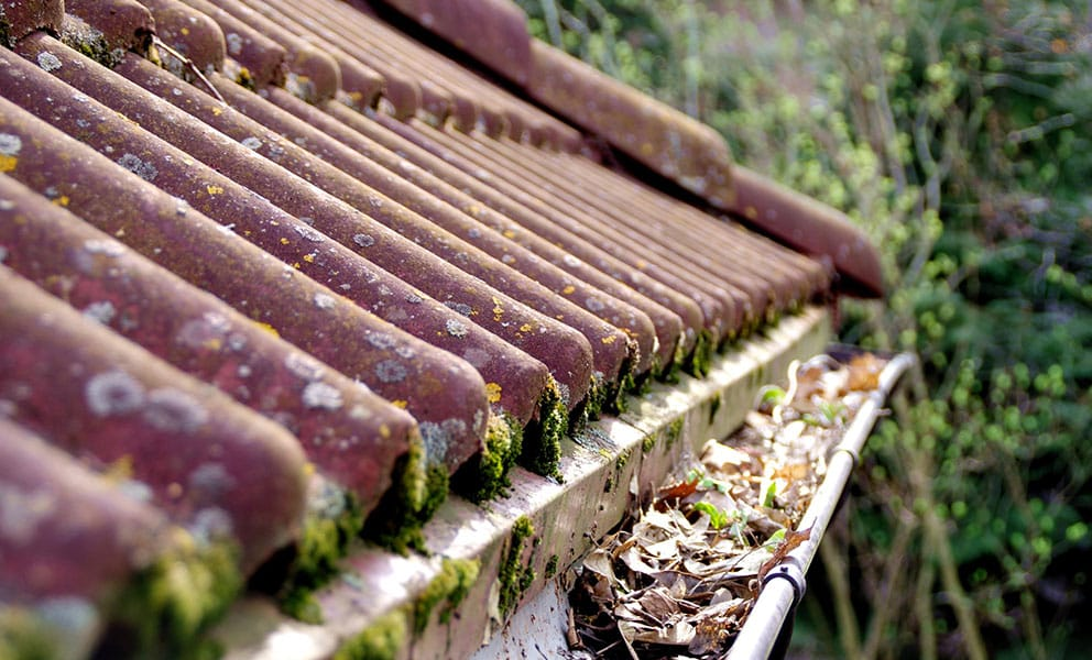 Why Clean Gutters Are an Essential Step for Spring Cleaning